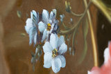 Van Os Stillife reproduction detail