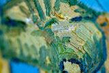 detail Vincents Bedroom in Arles Art institute of Chicago Van Gogh Replica