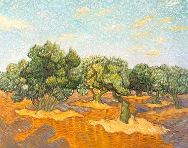 Olive Orchard Van Gogh replica